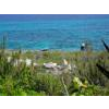 "BAHAMAS    ""OCEAN FRONT LOT"" **owner financing available**"